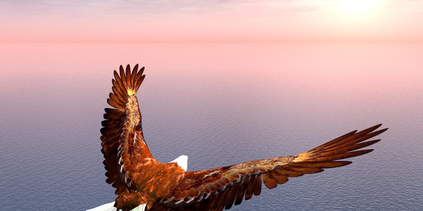 Adler-Seite-Praxis